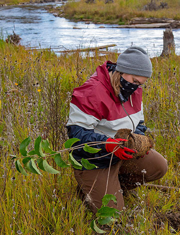 Student plants tree near Boardman River