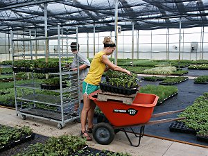 Plant science students work in a greenhouse