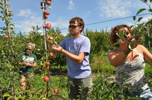 Plant science students inspect apple trees