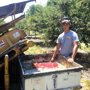 Plant science student harvests cherries